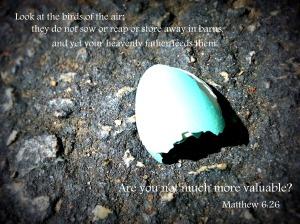 Matt. 6:26